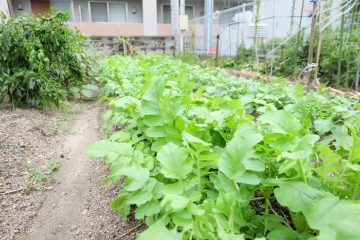 冬の野菜たち